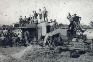 Festeggiamenti per la fine della trebbiatura negli anni '50