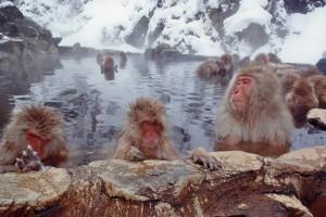 Segnalato: Renato Sacheli - Titolo: Tre piccoli Saru si rilassano in Onsen