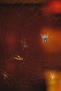 Nella tela del ragno - Dario Barachetti di Calolziocorte (LC)